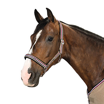 Eskadron Halfter Classic Sports Herbst 2016 Warmblut Taupe